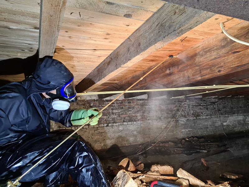 bestrijding van houtworm in kruipruimte Rotterdam